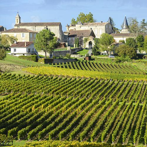 French vineyard with beautiful grapevines