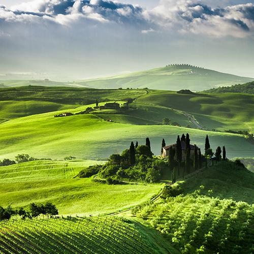 Italian vineyard with beautiful grapevines